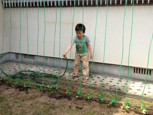 苗植えも無事に完了!たっぷりお水をあげます。